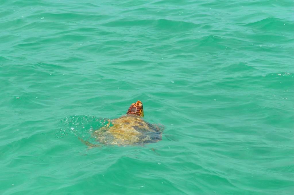 mexico tartaruga