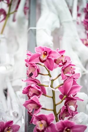 Il parco di  Keukenhof - La serra delle orchidee